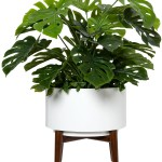 Homeware Trends: Indoor plants