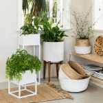 Feng Shui your home with indoor plants