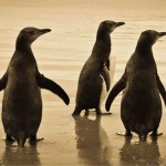 NZ Holiday Activity - watching Penguins