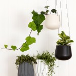 Indoor House Plant holders