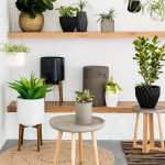 Bring outdoors indoors with new house plants
