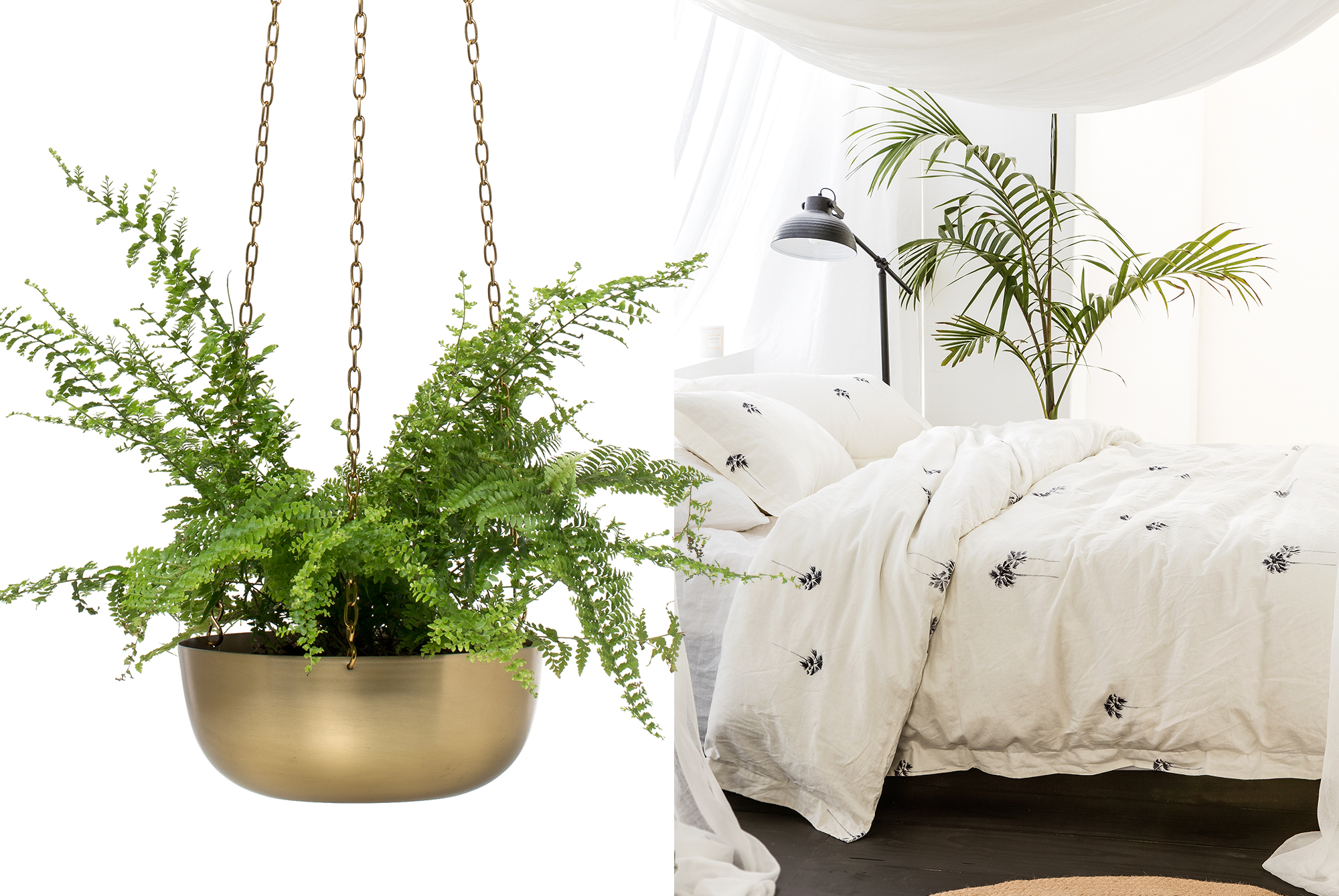 Interior Trends: Bring outdoors inside with hanging plants and indoor pots